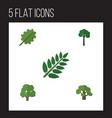 flat icon bio set of evergreen decoration tree vector image