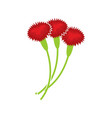 carnation isolated floral bouquet on white vector image
