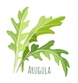 Green arugula leaves with colourful inscription vector image vector image