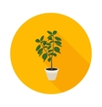 flat icon ficus vector image