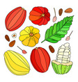 cocoa fruit set vector image