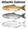 three drawing styles of atlantic salmon vector image