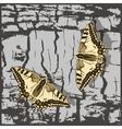 Flying butterfly over grunge wall vector image vector image