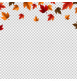 autumn border with leaves isolated vector image
