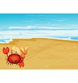 A red crab with a shell at the seashore vector image vector image