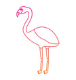 flamingo exotic bird decorative flat design vector image