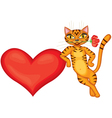Tabby cat gives heart vector image