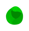 cabbage flat icon vector image