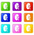kidney set 9 vector image