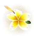 plumeria frangipani vector image