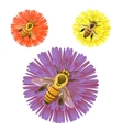 Bee on the flower vector image