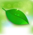 Fresh background Leaf vector image