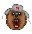 russian angry bear vector image