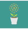 Money tree with coins and dollar sign in the pot vector image