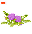 floral composition purple rose flowers with vector image