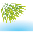 bamboo leaves vector image vector image