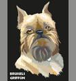 colored brussels griffon portrait vector image