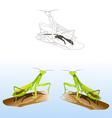 praying mantises vector image