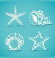 decorative set sketch of seashells and starfish vector image vector image