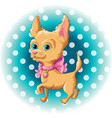 a cute dog chihuahua vector image