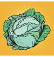 Cabbage healthy vegetarian food farm product vector image