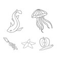 jellyfish squid and other speciessea animals set