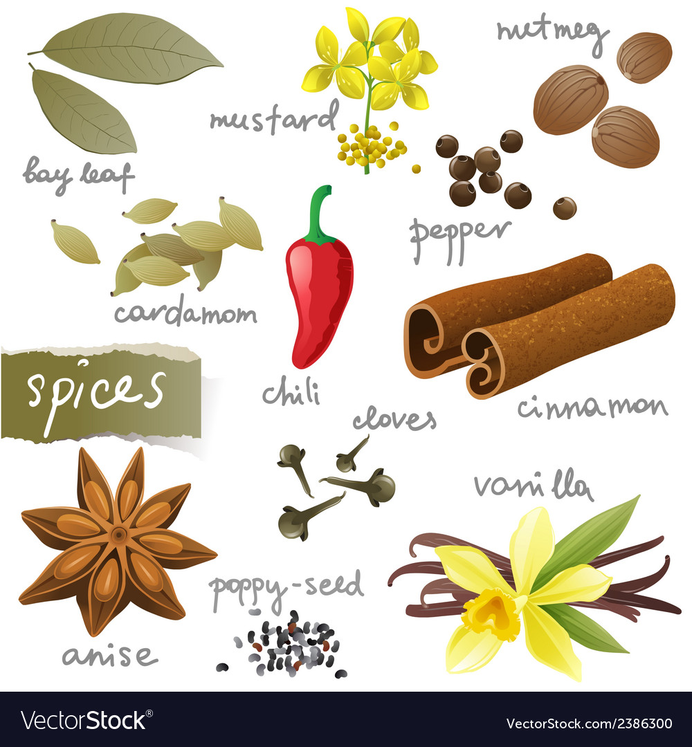 Set of different spices vector