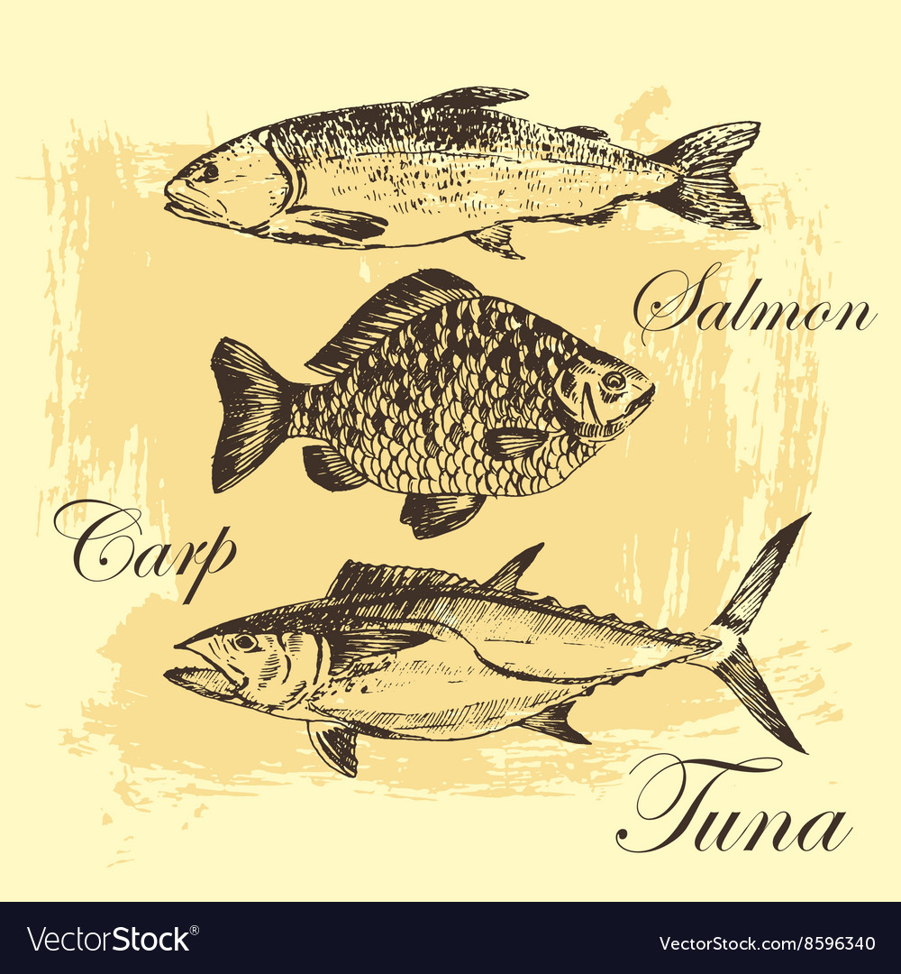 Fish sketch drawing  salmon trout carp vector