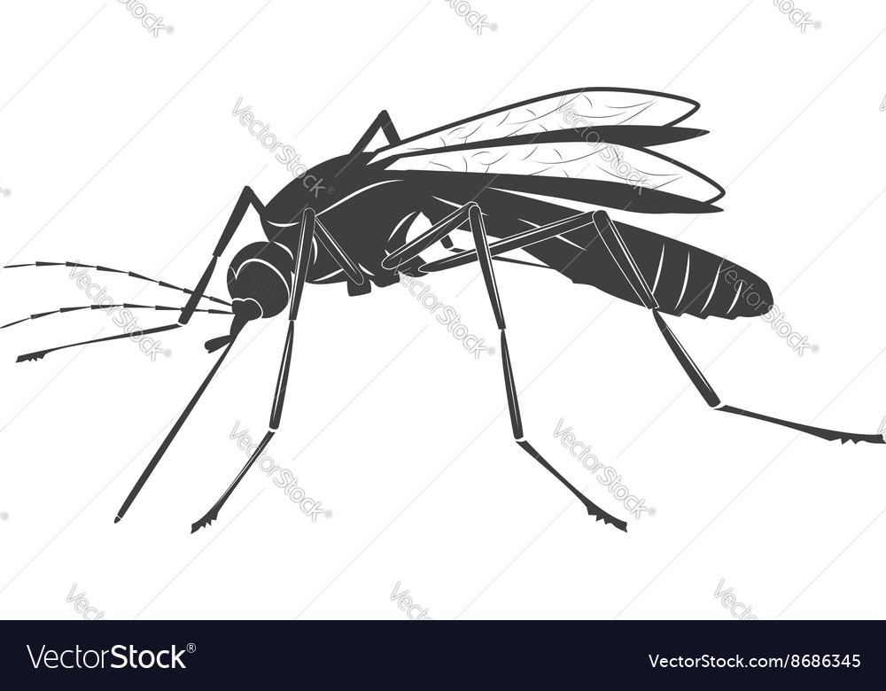 Mosquito on white background vector