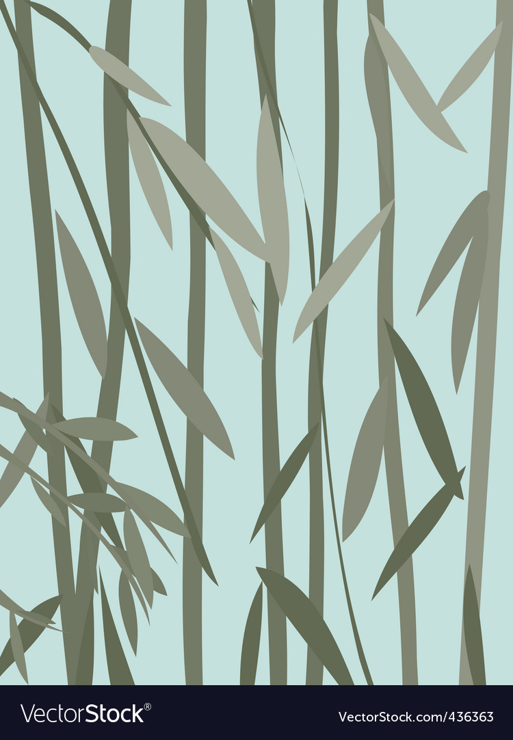 Willow leaves vector
