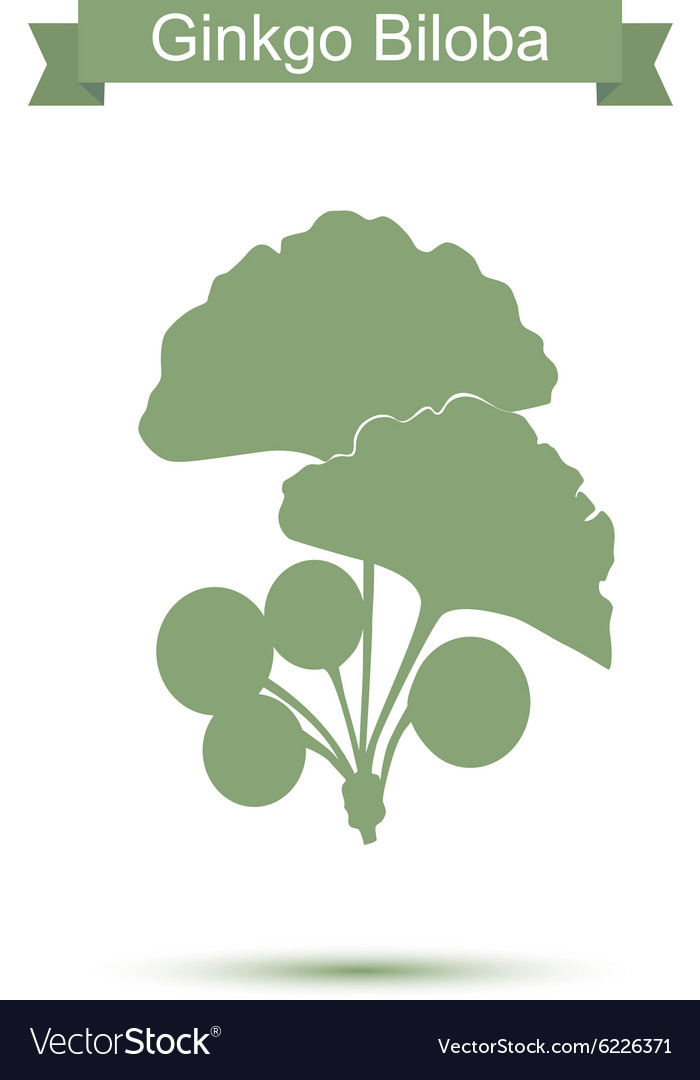 Ginkgo biloba stylizes leaves silhouette of vector