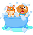 Cute dog and cat bath vector image