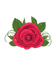 Close-up beautiful rose isolated on white vector image