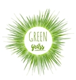 Realistic green grass lawn vector image