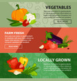 fresh vegetables localy grown at farm internet vector image