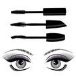 eye mascara vector image vector image