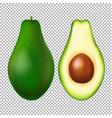 avocado transparent background vector image