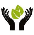 Hands with leaf symbol vector image
