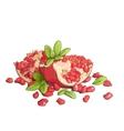 Ripe pomegranates vector image vector image
