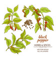 black ground pepper vector image