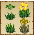 Stages of growth tulips planting and withering vector image vector image
