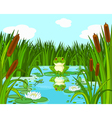 Frog on the lily vector image vector image