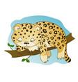 cute little leopard dozing vector image