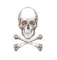 Skull and bones drawing vector image