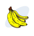 banana pack hand drawn image vector image
