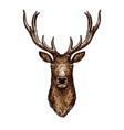 deer elk or reindeer sketch of wild forest animal vector image
