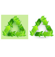 leaves recycle symbol vector image vector image