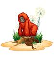 Orangutan vector image vector image