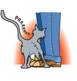 Cat rubbing on pant leg vector image vector image