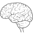 Human Brain Side View vector image